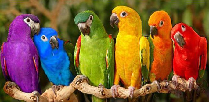 поющие птицы фото