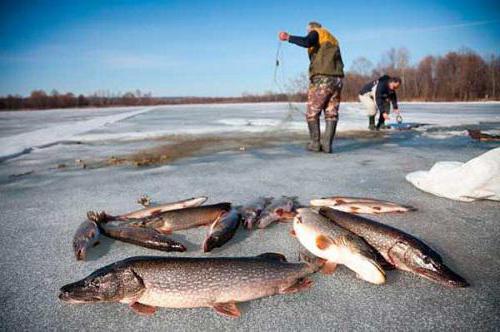 как вытащить пойманную рыбу из воды