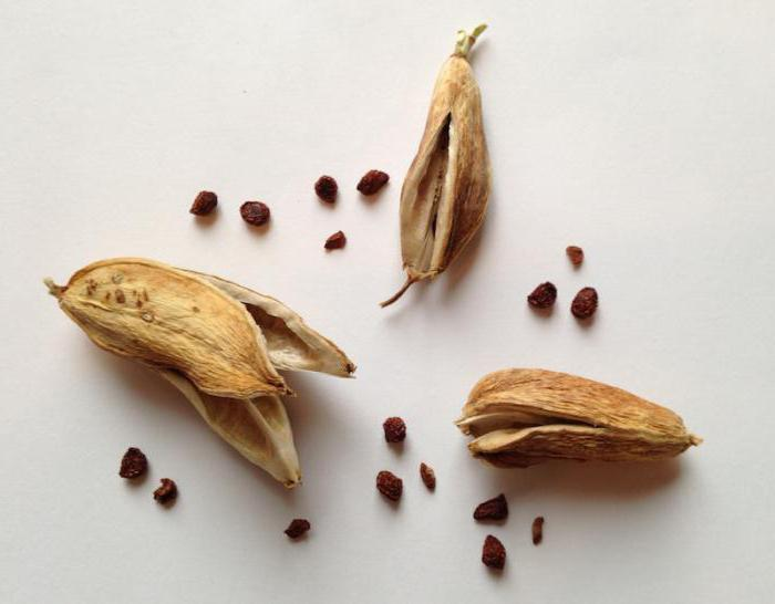 растение ирис характеристика и описание сорта