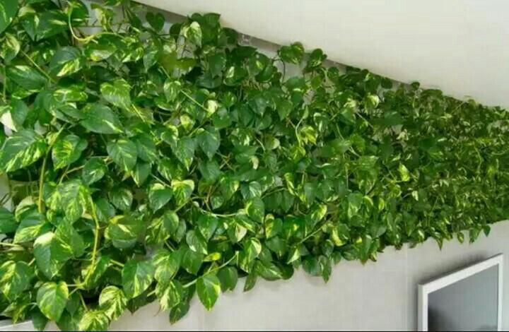 Идеи формирования растения