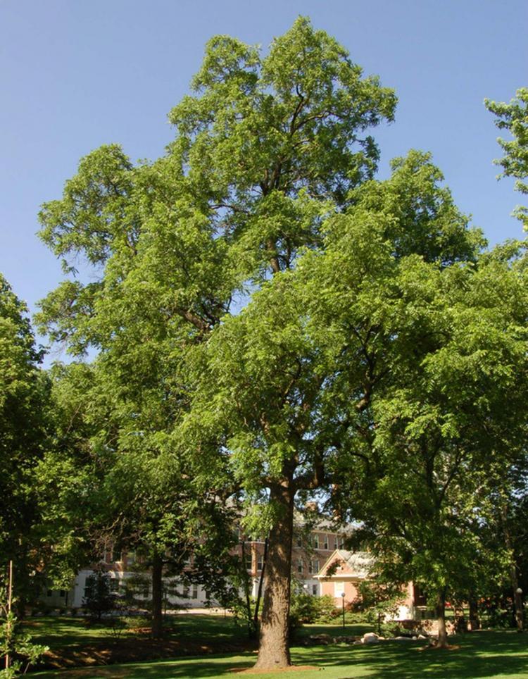 цезарь является фото всех деревьев растущих в костроме всегда помогаю подобрать