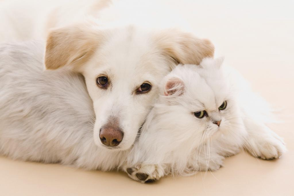 Введут ли налог на домашних животных в России?