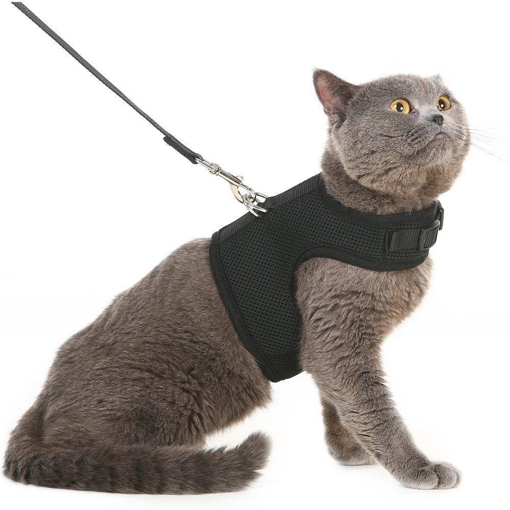 шлейка для кошек как одеть в картинках вас сети есть