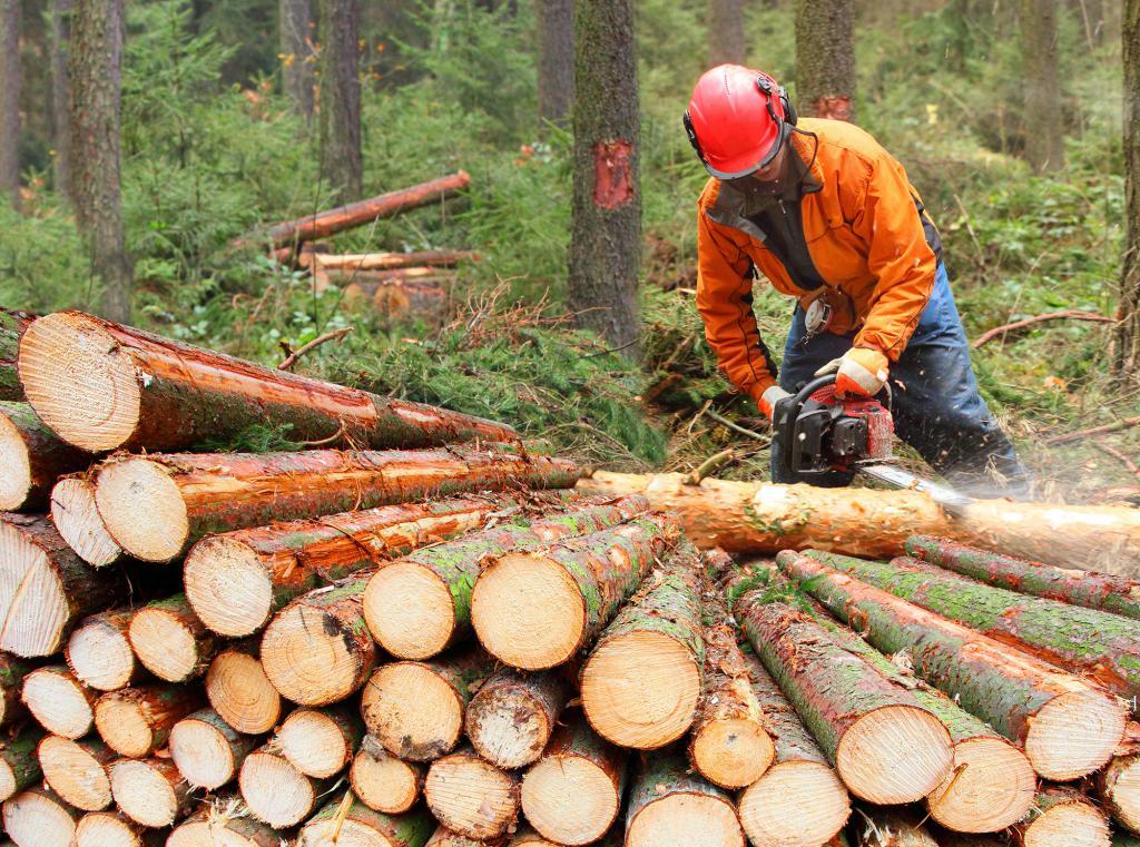 types of felling