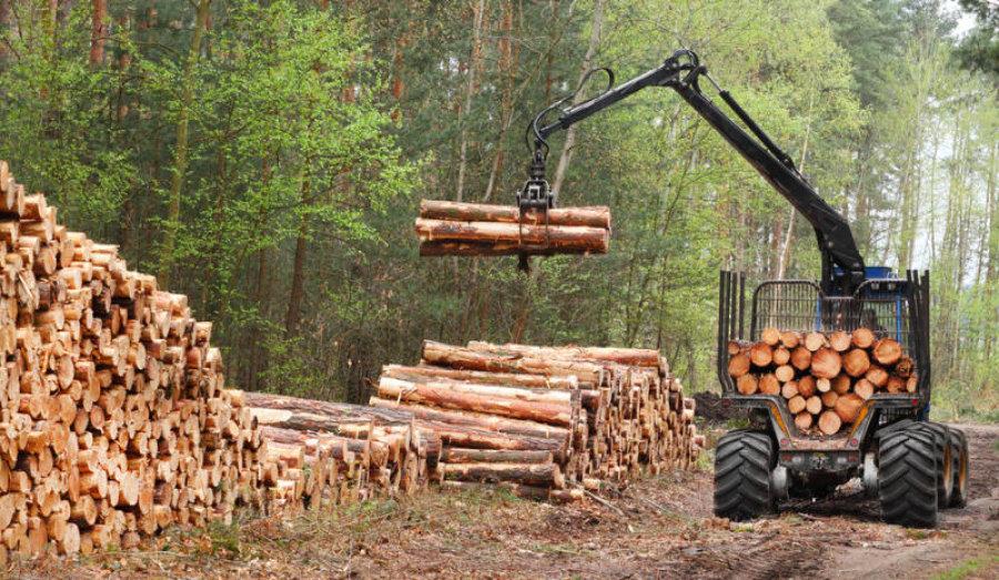 black lumberjacks