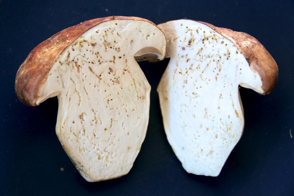 белый гриб в разрезе фото мама-дельфин