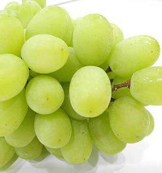сорт винограда столетие