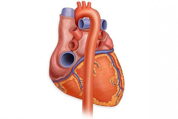Левый желудочек сердца: возможные патологии