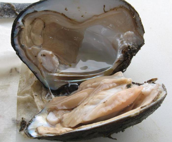 как образуется жемчуг в моллюске