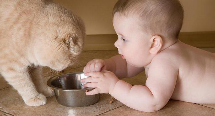 аллергия на кисломолочные продукты у взрослых