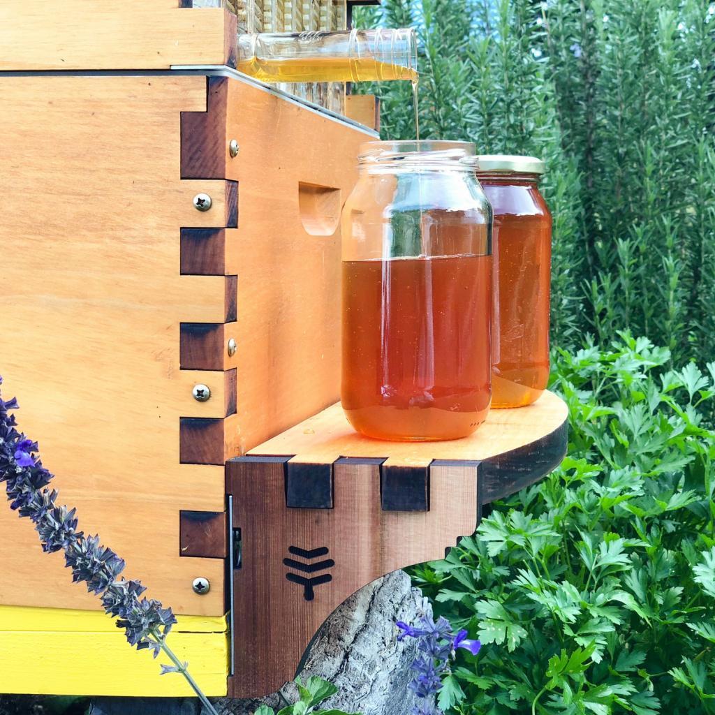 Водка кедровая в домашних условиях: особенности приготовления, рецепты