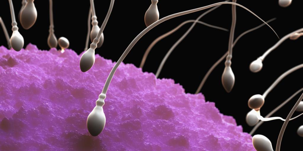 Сколько образуются сперматозоиды