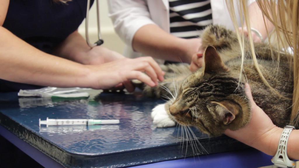 лечение кота