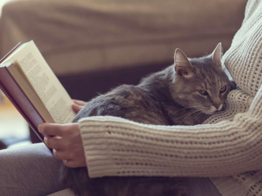 почки кота симптомы