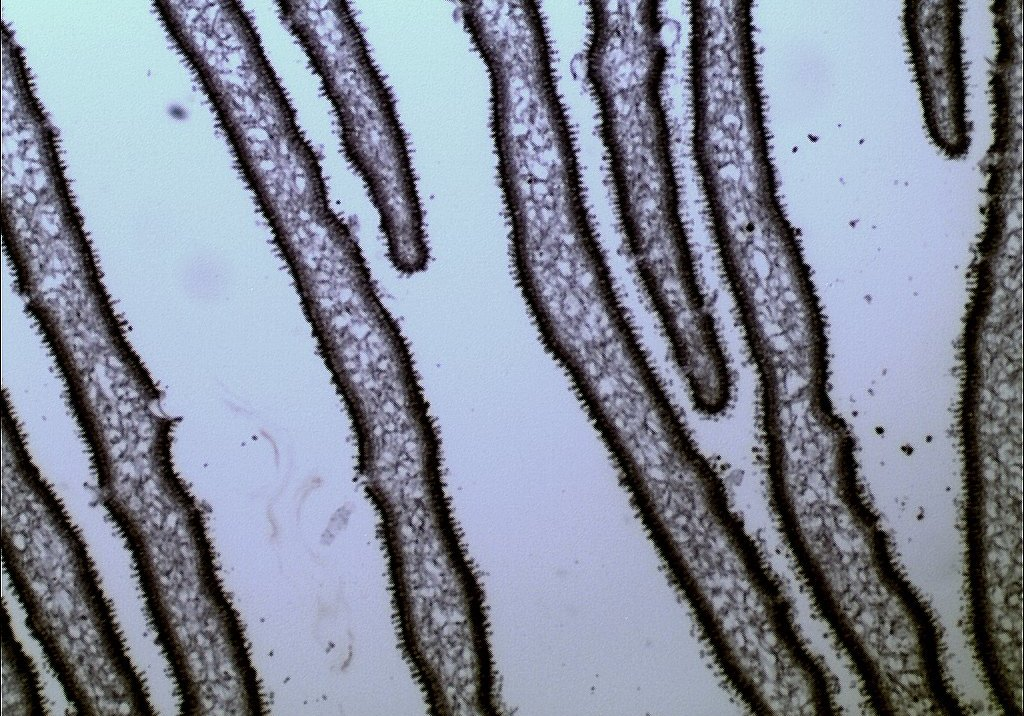 гифы гриба
