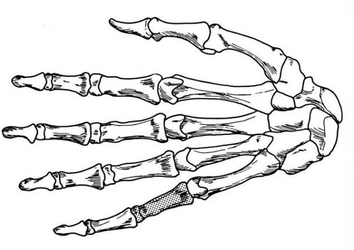 как нарисовать руки знакомства