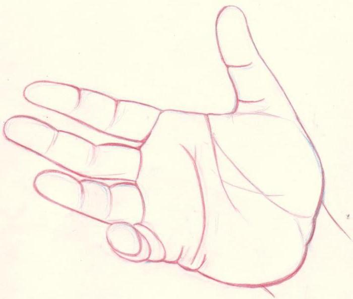 как нарисовать кисть руки в разных положениях