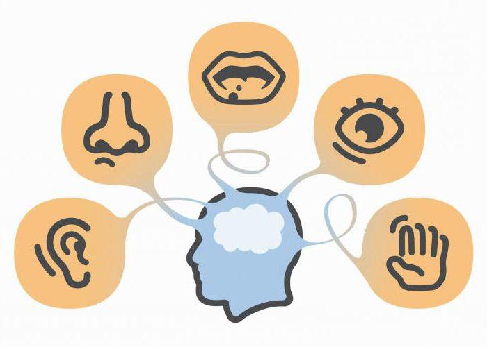 расстройства восприятия психиатрия
