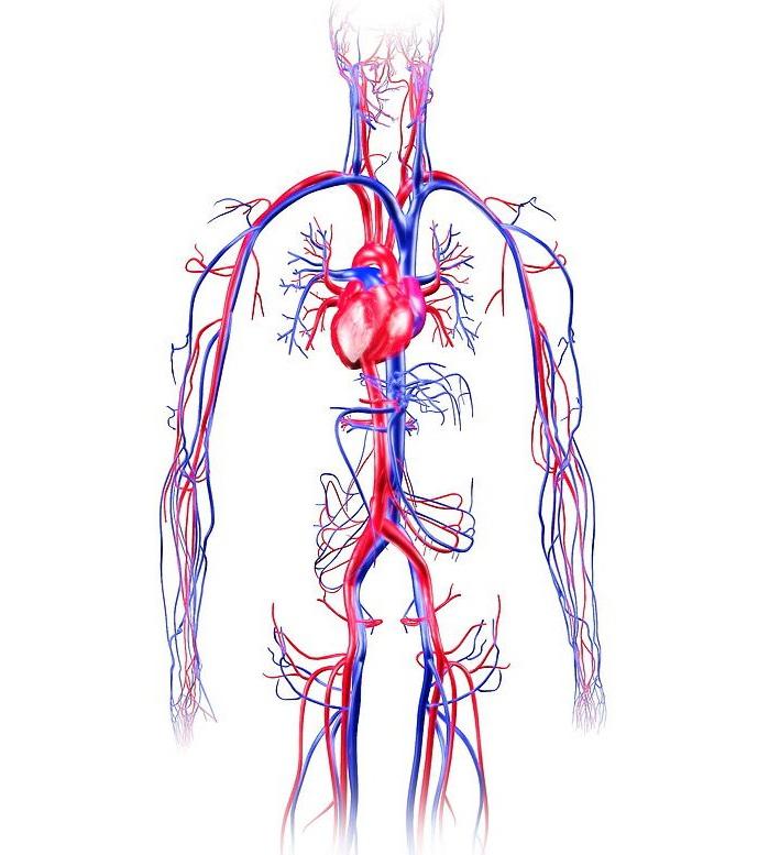 Диф. диагностика анемий: суть и современные технологии