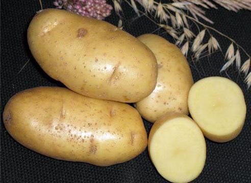 3 окт 2016. На этом фундаменте norika развивалась как селекционер и семеновод высокопродуктивных сортов картофеля, и на сегодняшний день. В рф, включено 22 сорта селекции norika: адретта, альбатрос, бонус, вализа, вега, венди, вилоу, гала, деликат, инара, каратоп, карлена, кея,