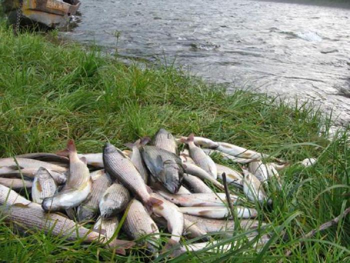 река Бирюса красноярский край