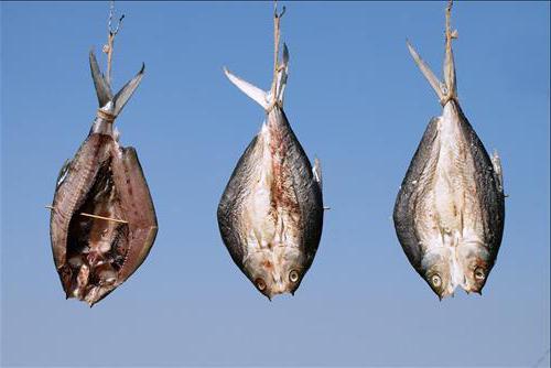 инновации в технологии рыбы холодного копчения