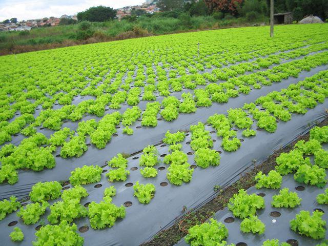 Борьба с сорняками на огороде по-современному: методы ... Борьба с Сорняками
