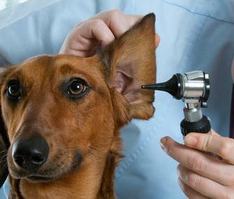 отит наружного уха симптомы и лечение у детей