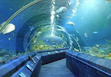океанариум в паттайе как добраться самостоятельно