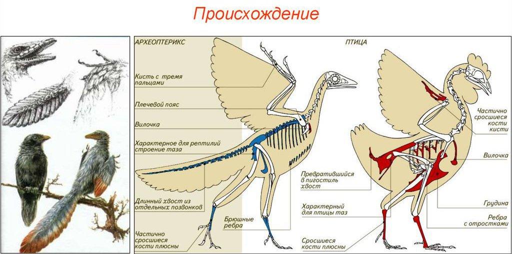 Птицы произошли от динозавров
