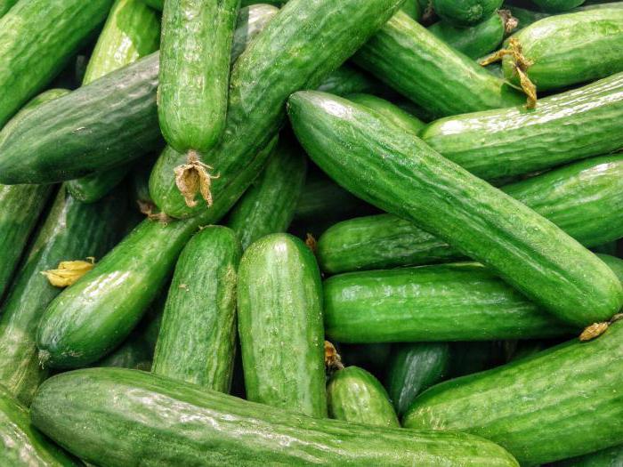 как увеличить урожай огурцов