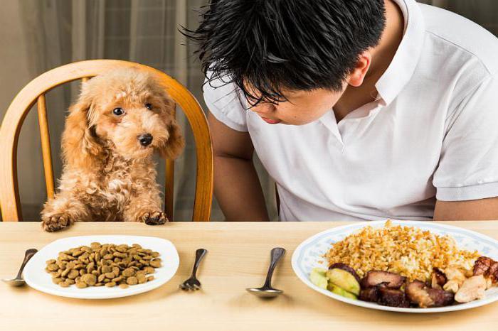 как проявляется аллергия у собак