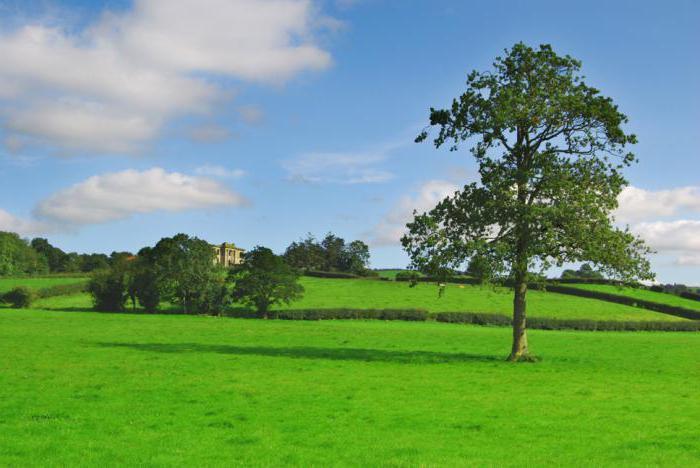 Как сделать переоценку кадастровой собственности на землю