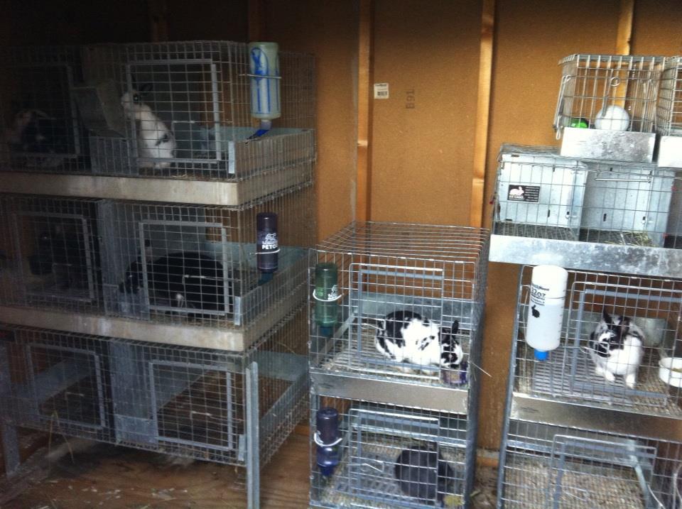 помещение для кроликов