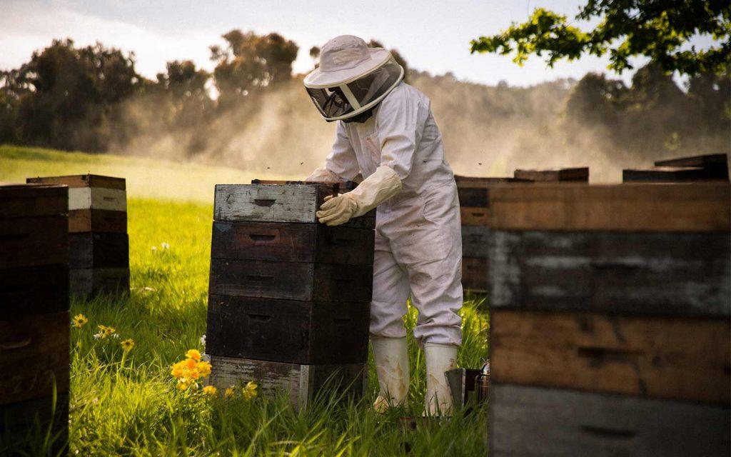 улик с пчелами