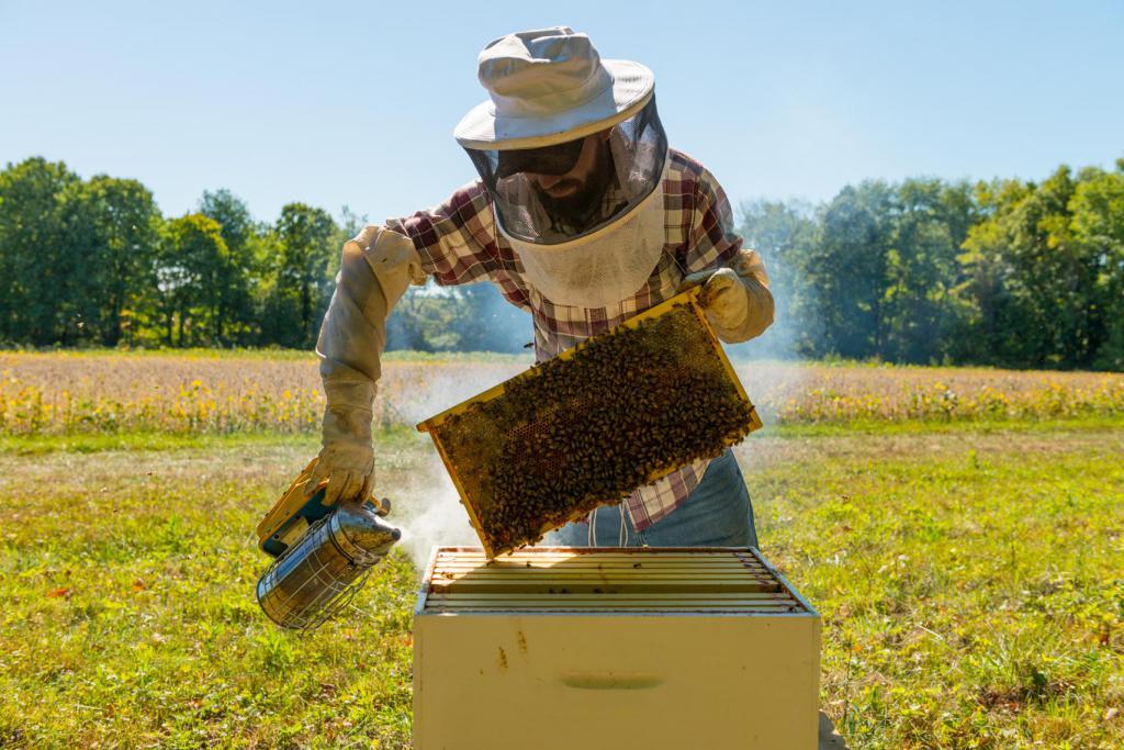 правильный уход за пчелами