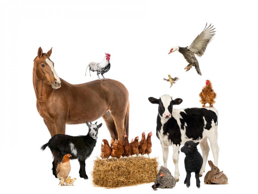 разные животные