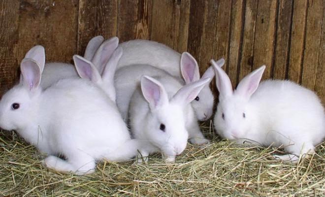 кролики в крольчатнике