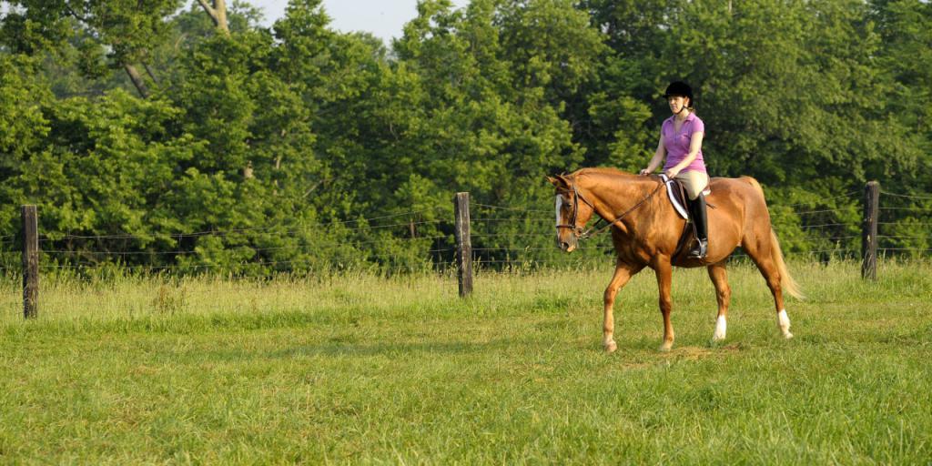 Как управлять лошадью?