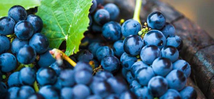 можно ли потолстеть от винограда кишмиш