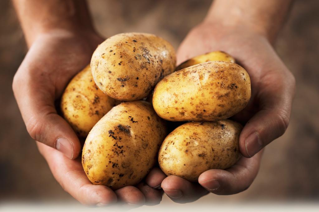 Отзывы о картофельной диеты