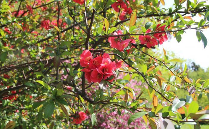 калининград ботанический сад отзывы