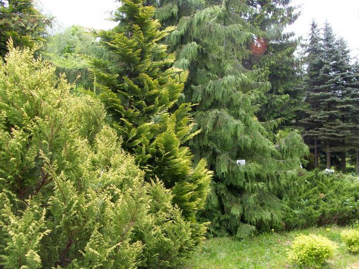 ботанический сад калининград как добраться