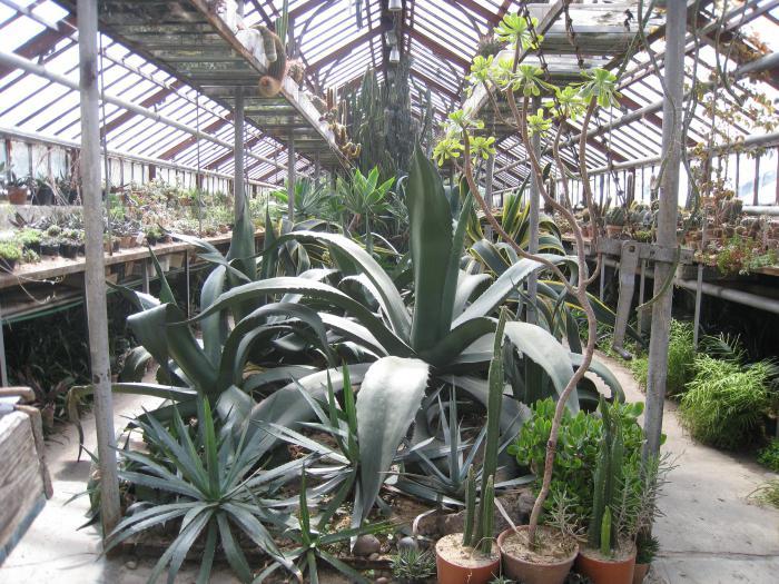 ботанический сад калининград фото