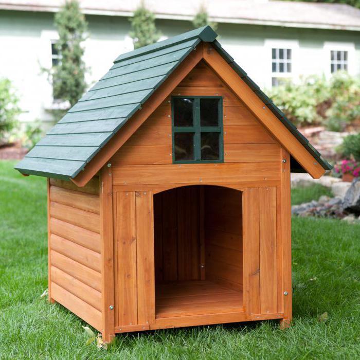 как приучить собаку к будке во дворе