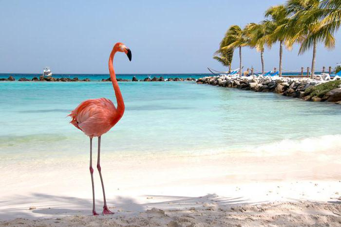 How to draw a Flamingo - pink wonder of nature: step by step guide