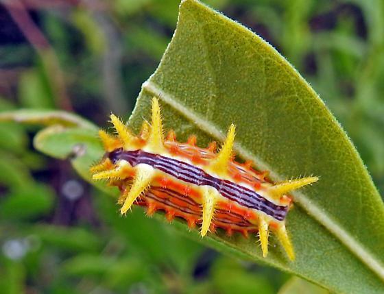 гусеница с рогом на хвосÑ'е
