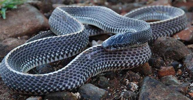 что едят змеи