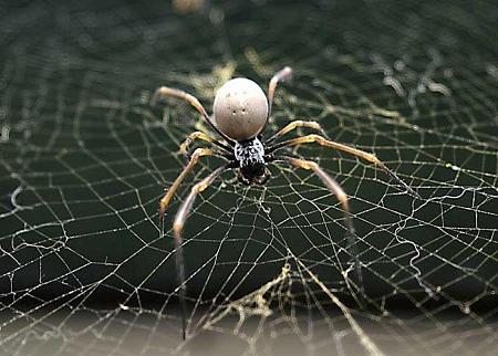 К чему снится желтый паук