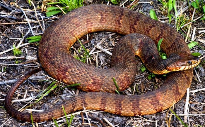 когда сниться змея к чему это